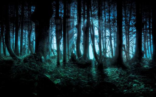 Bosque de Cedro